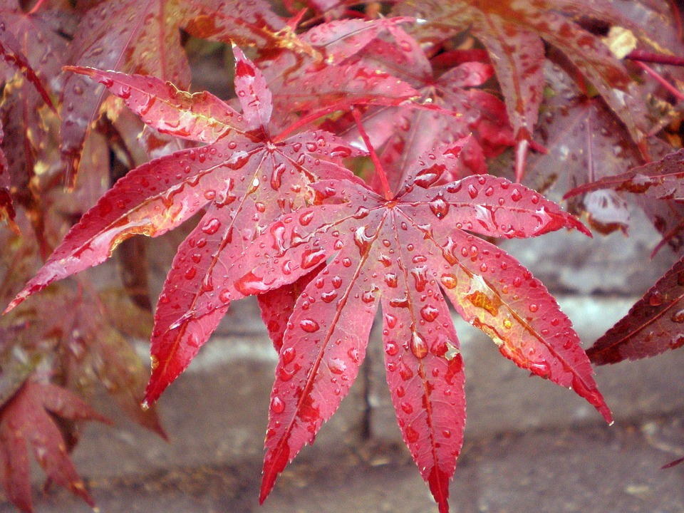 мокрые листья осенью