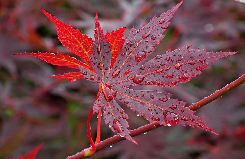 мокрый осенний лист