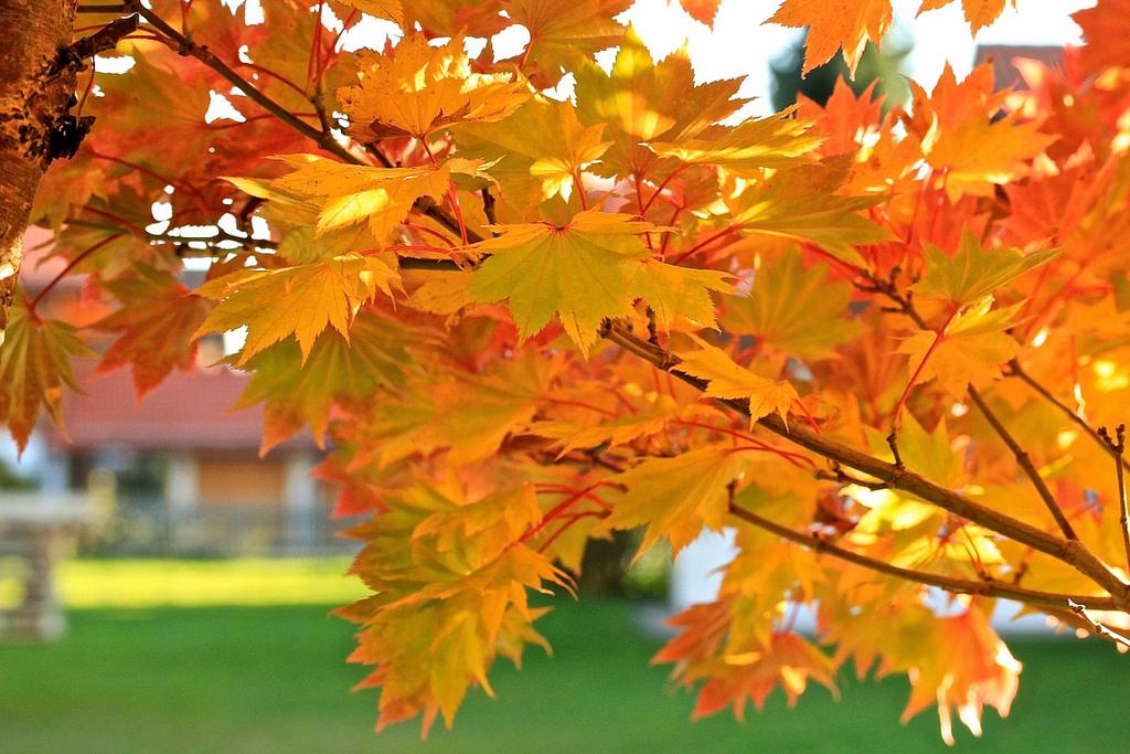 осенние дубовые листья