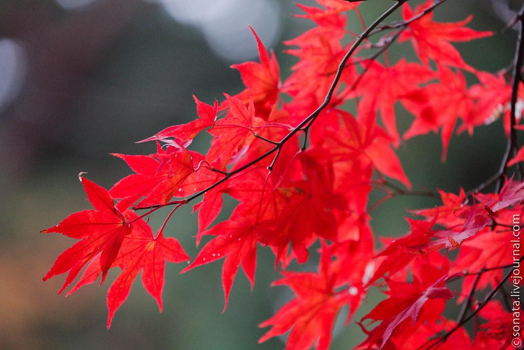 красные осенние листья картинки