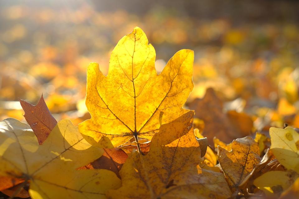 красивый желтый лист