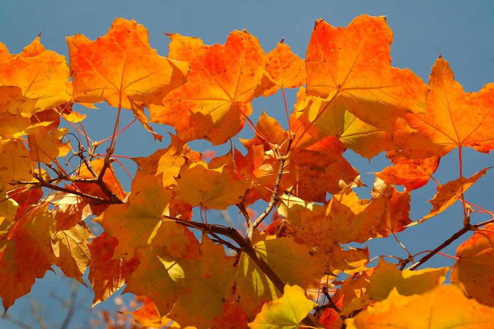 красивые осенние листья на фоне голубого неба