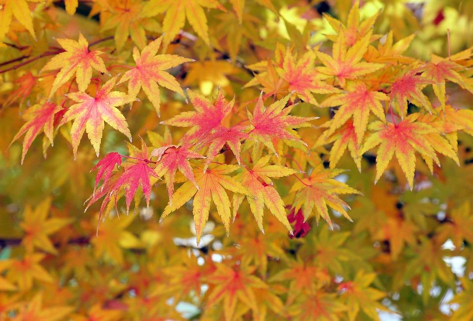 красивые листья фото