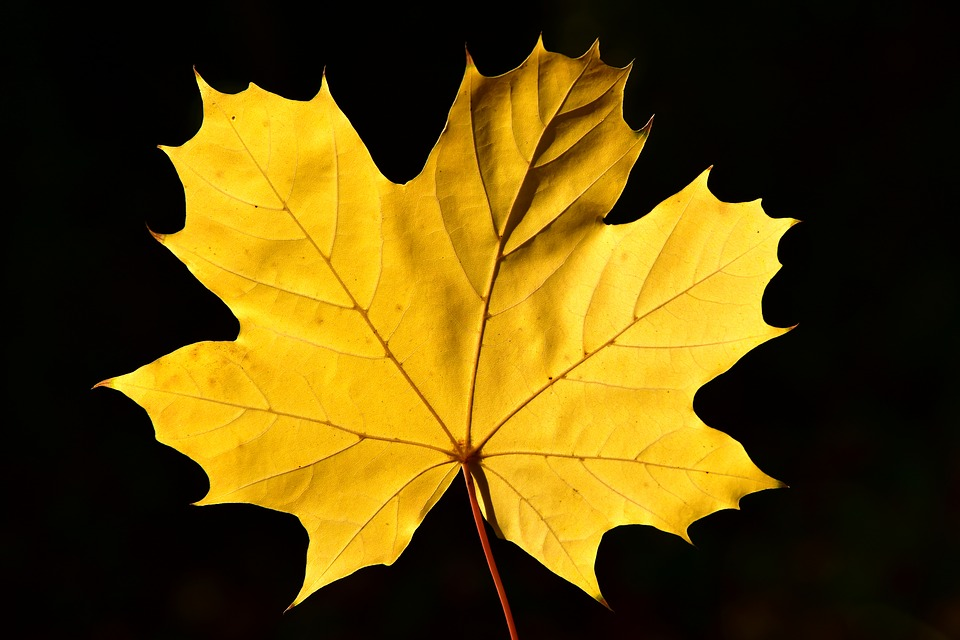 красивый желтый лист на темном фоне
