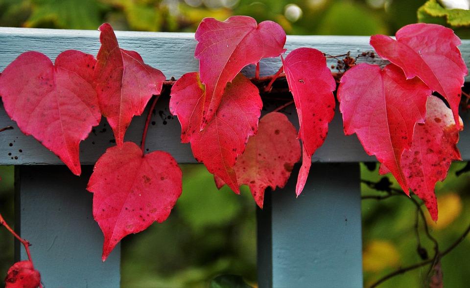 красивые листья осенью