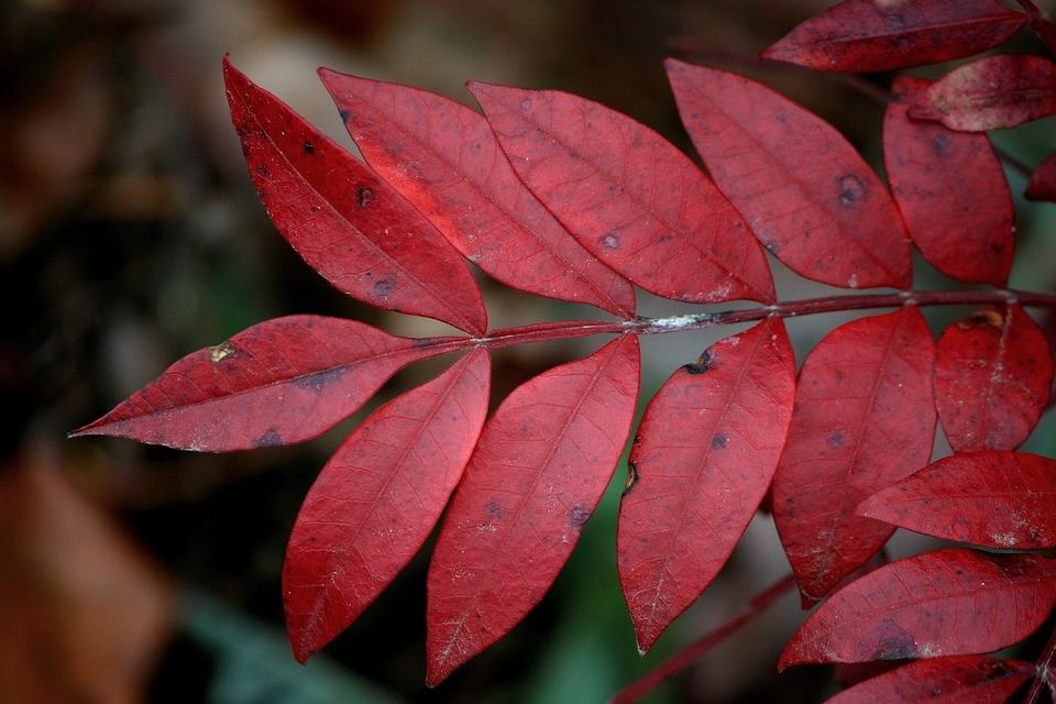 красивый лист осенью