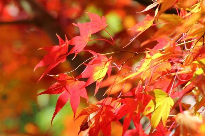 осенние красивые листья