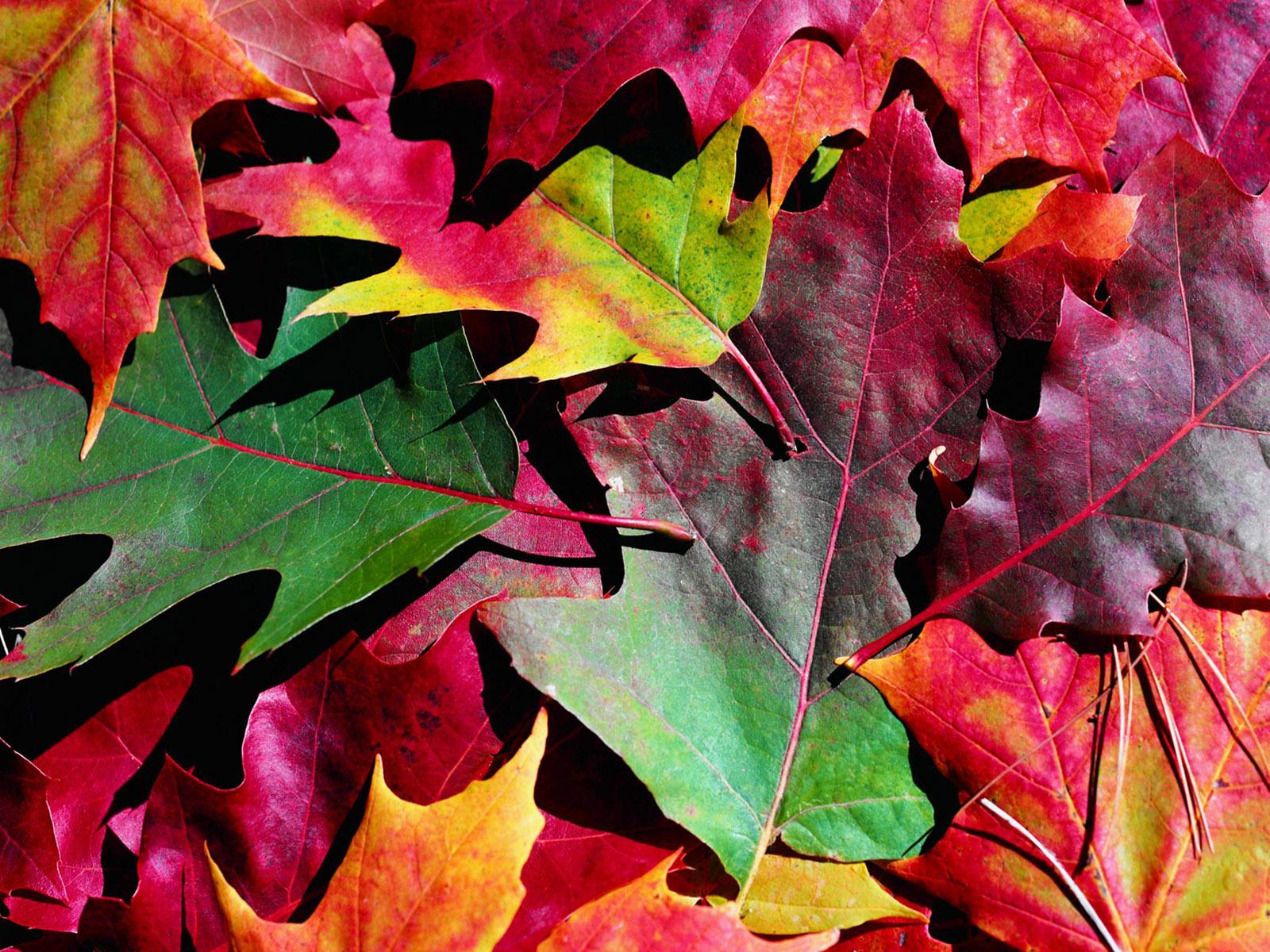 разноцветные листья осенью