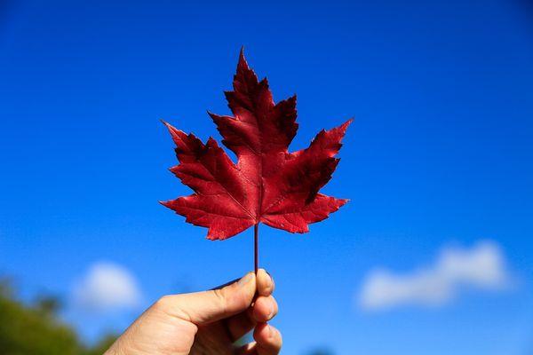красивый осенний лист