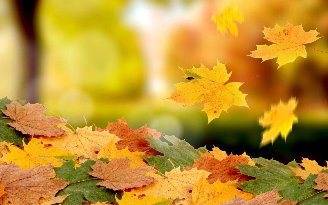 красивый листопад