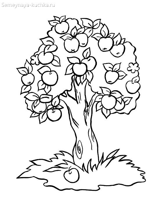 раскраска красивая яблоня дерево