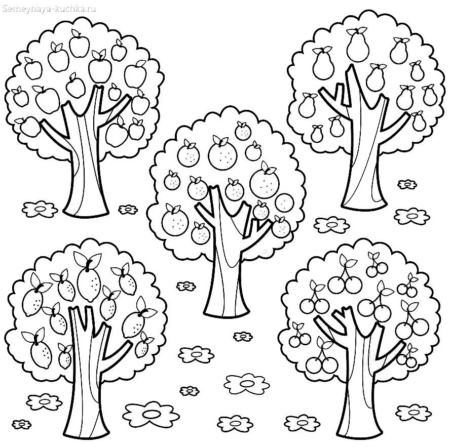 раскраска садовые деревья в саду