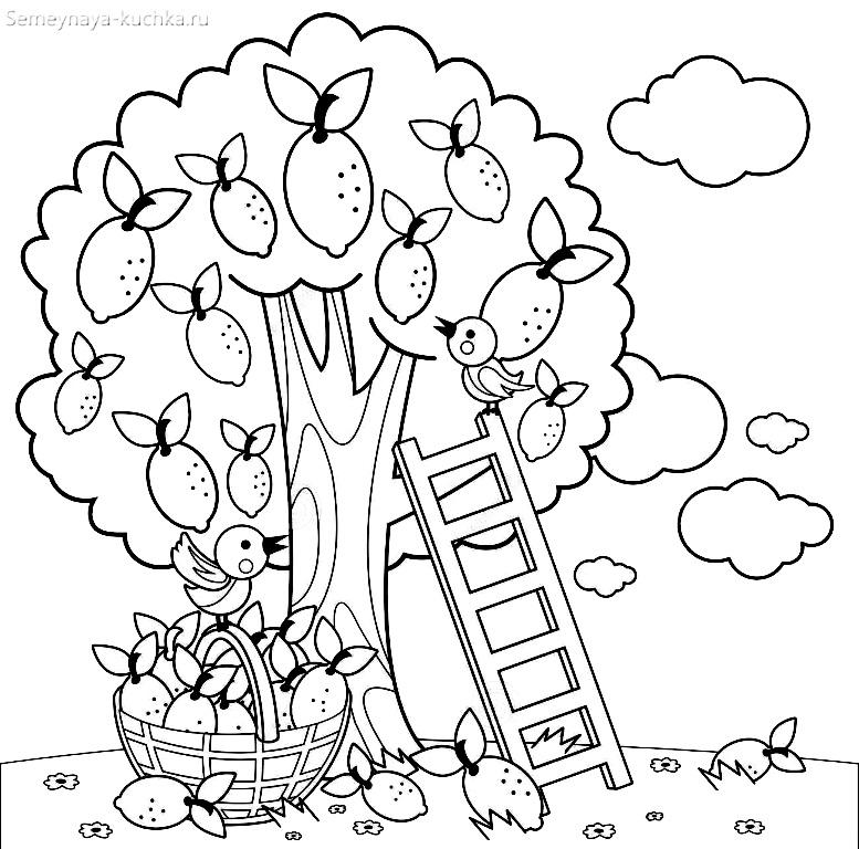плодовое дерево лимон сбор урожая
