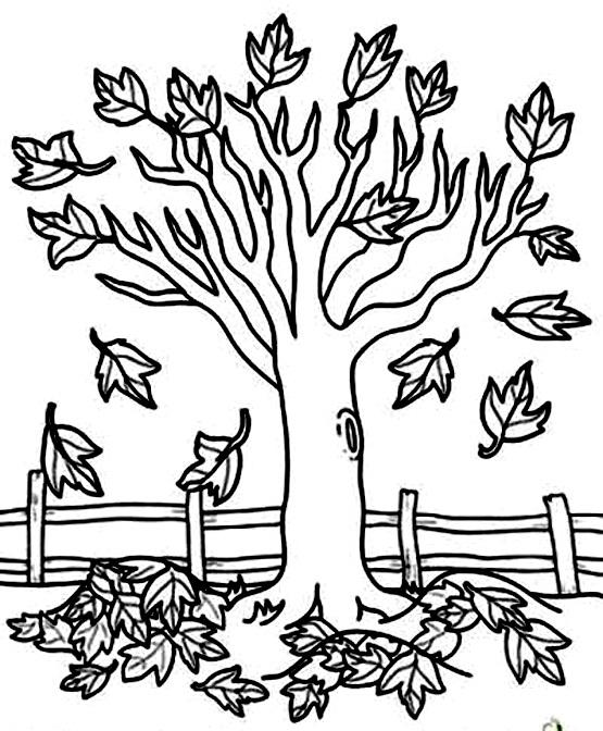 раскраска дерево листья падают