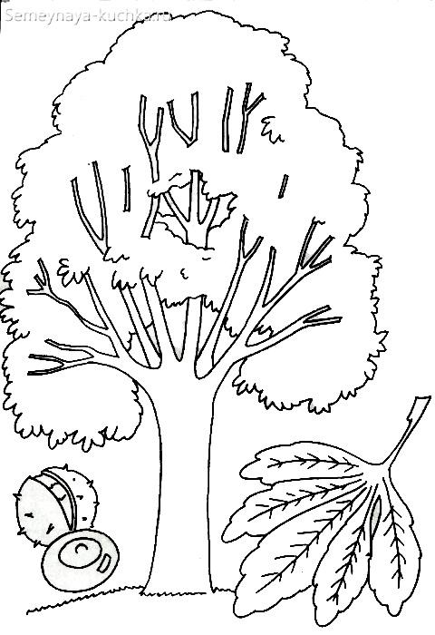 раскраска дерево и лист каштана