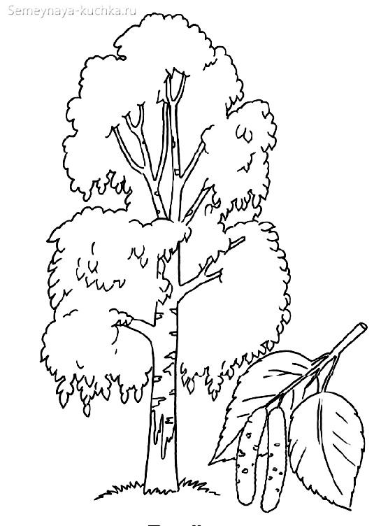 раскраска дерево береза с листом березовый