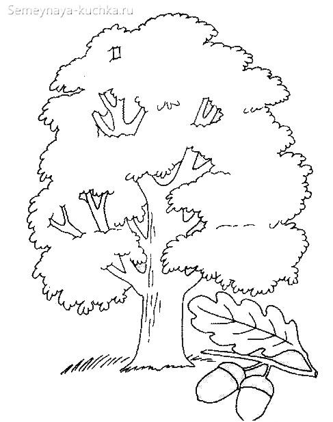 раскраска дерево дуб и лист дубовый