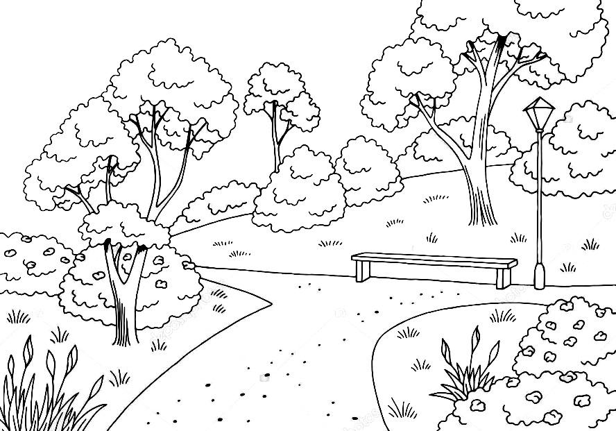 раскраска деревья в парке