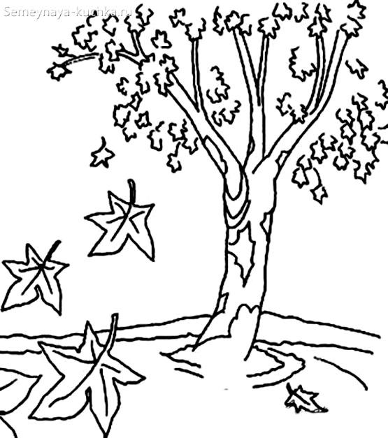 раскраска осеннее дерево клен