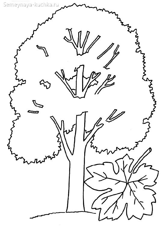 раскраска дерево клена и кленовый лист