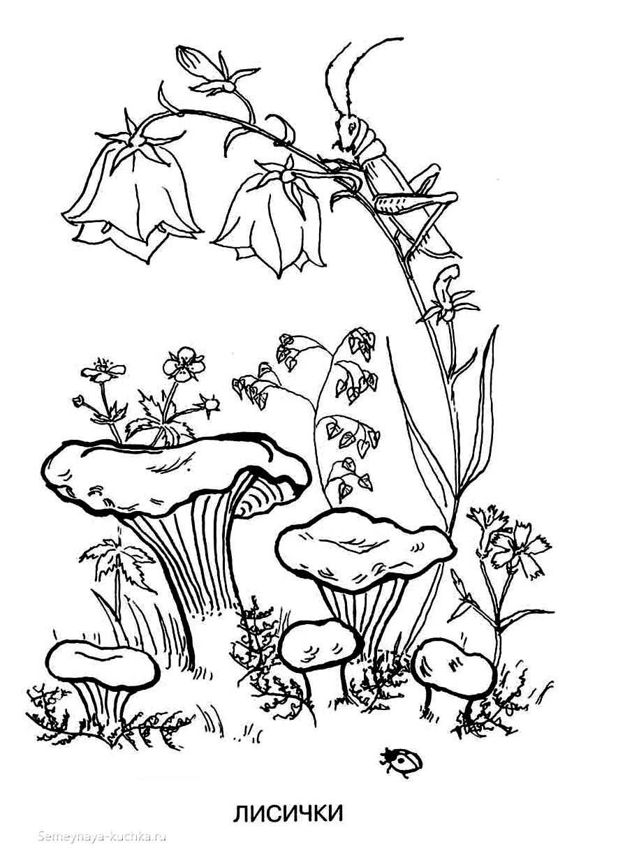 раскраска лисички грибы
