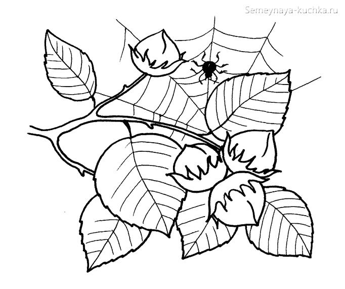раскраска листья орешника