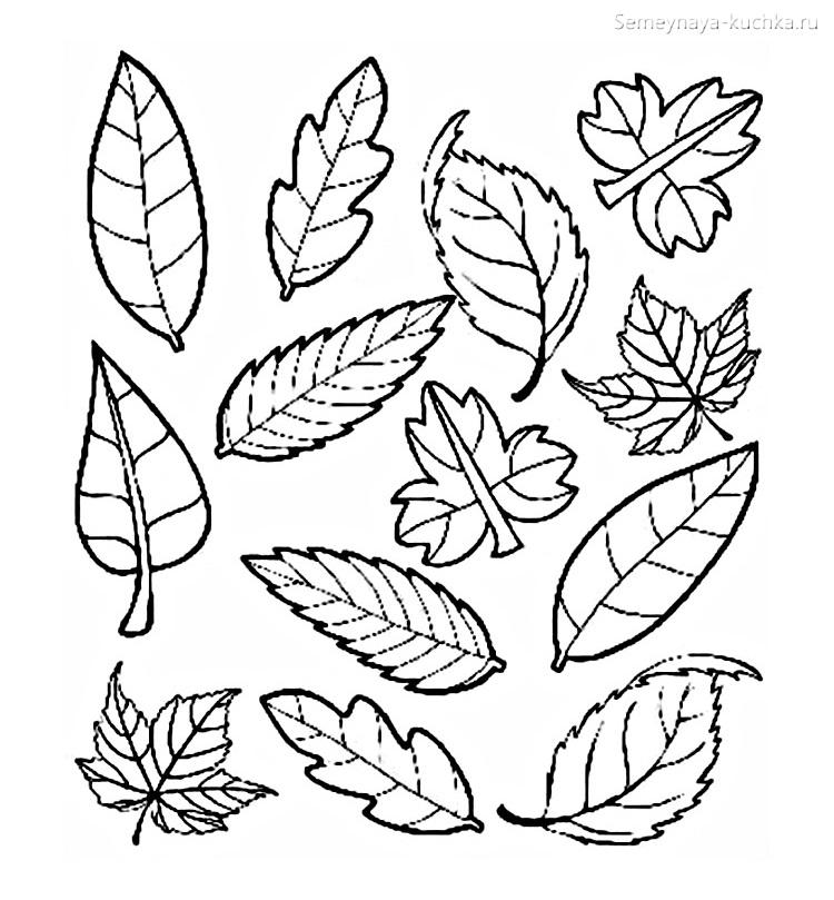 раскраска листья осенние детские