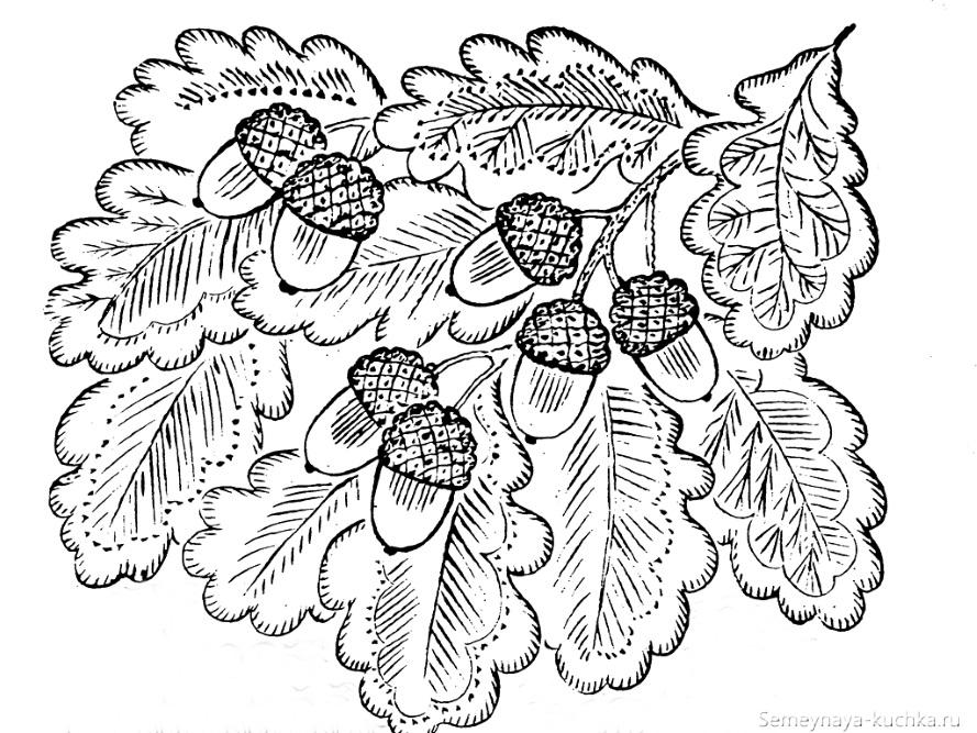раскраска листья дубовые