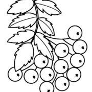 Раскраска ЛИСТЬЯ (44 картинки с осенними листочками).