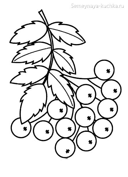 раскраска листья рябины