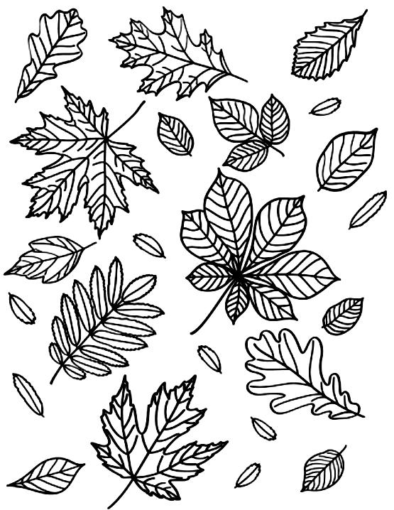 раскраска листья летят