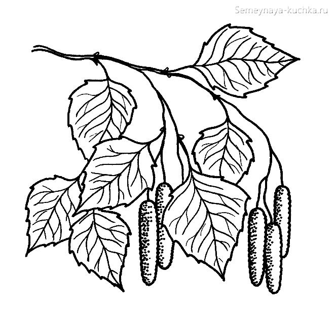 раскраска листья березы
