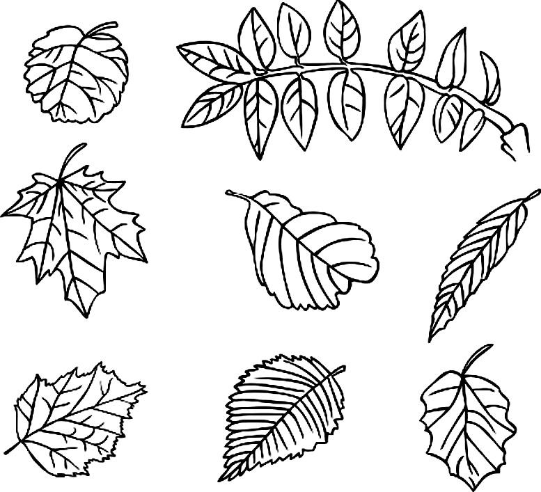 раскраска листья для детей