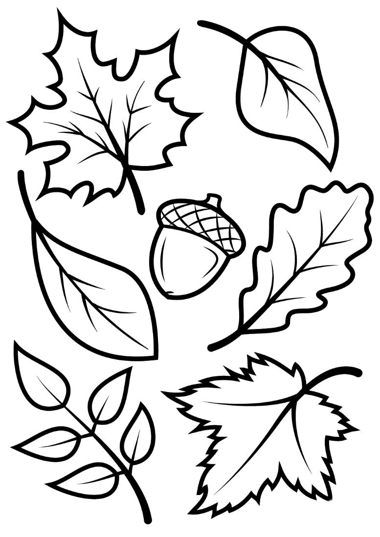 раскраска листья для занятий
