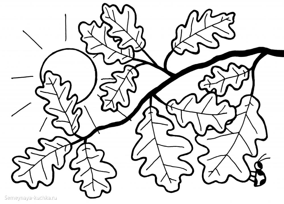 раскраска листья на ветке