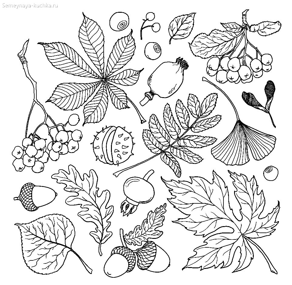 раскраска листья и дары осени