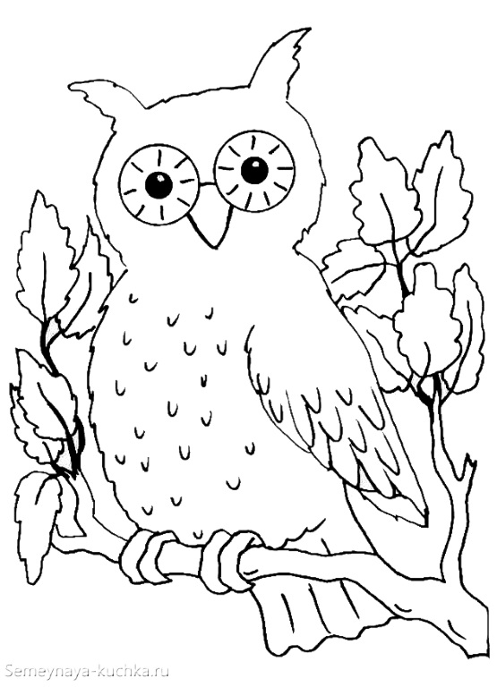 раскраска осенняя для детей с совой
