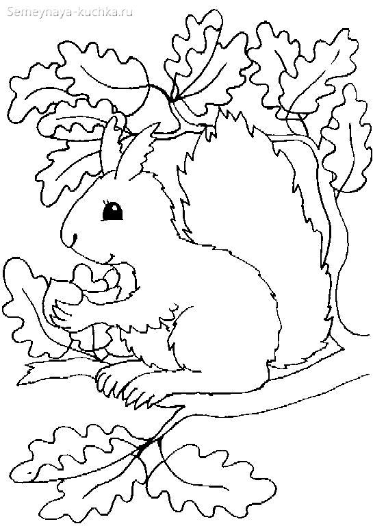 раскраска осенняя для детей белочка