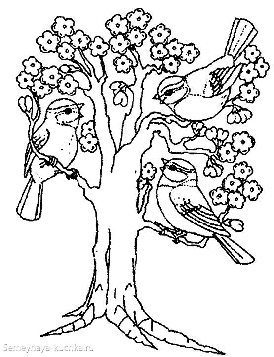 раскраска птицы на весеннем дереве