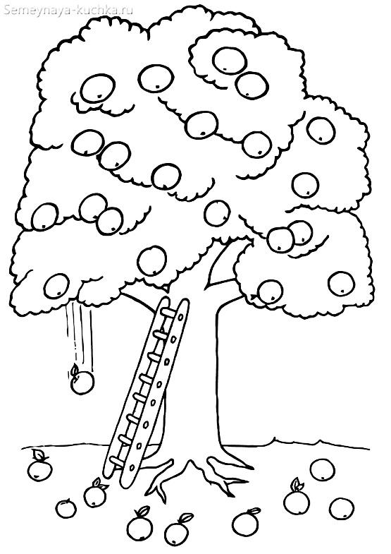 раскраска плодовое дерево