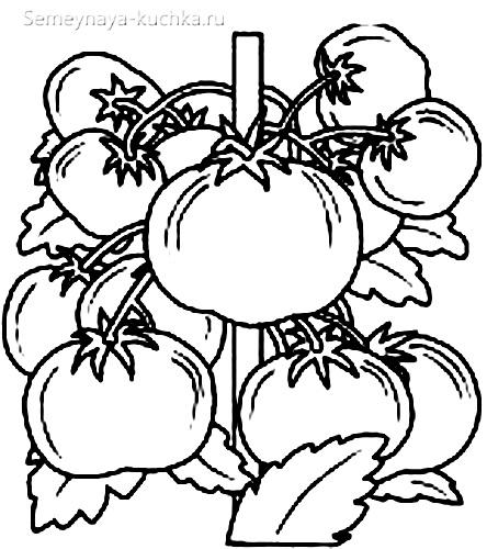 раскраска овощи помидоры
