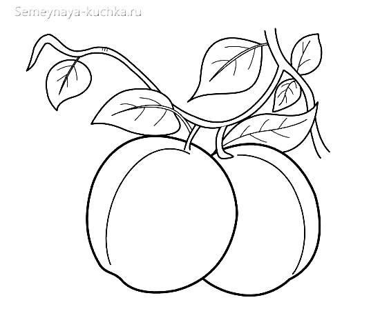 раскраска фрукты сливы